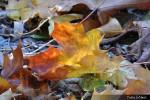 Kouzlo podzimu_18