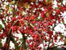 Kouzlo podzimu_1