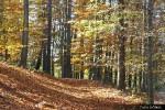Kouzlo podzimu_35